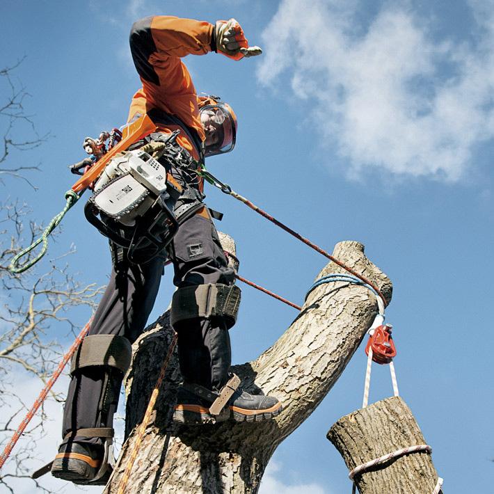 Cormaf srl motosega abbattimenti speciali e tree climbing